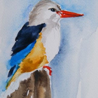 Watercolour painting. Grey HOoded Kingfisher (LBA031) Artist: Lori Bentley