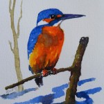 Watercolour painting. Kingfisher (RRA001) Artist: Ros Ridley