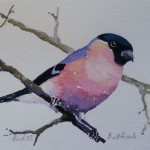 Watercolour painting. Bullfinch (RRA004) Artist: Ros Ridley