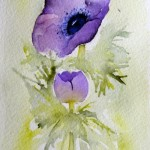 Watercolour painting. Purple Anemone (SPA007) Artist: Seonaid Parnell