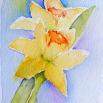 Watercolour painting. Two Daffodils (SPA008) Artist: Seonaid Parnell