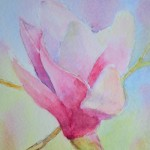 watercolour painting. SBA004 Magnolia. Artist: Sue Bradley