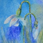watercolour painting. SBA014 Snowdrops. Artist: Sue Bradley